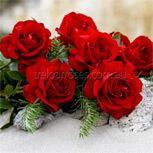 Gallipoli Roses